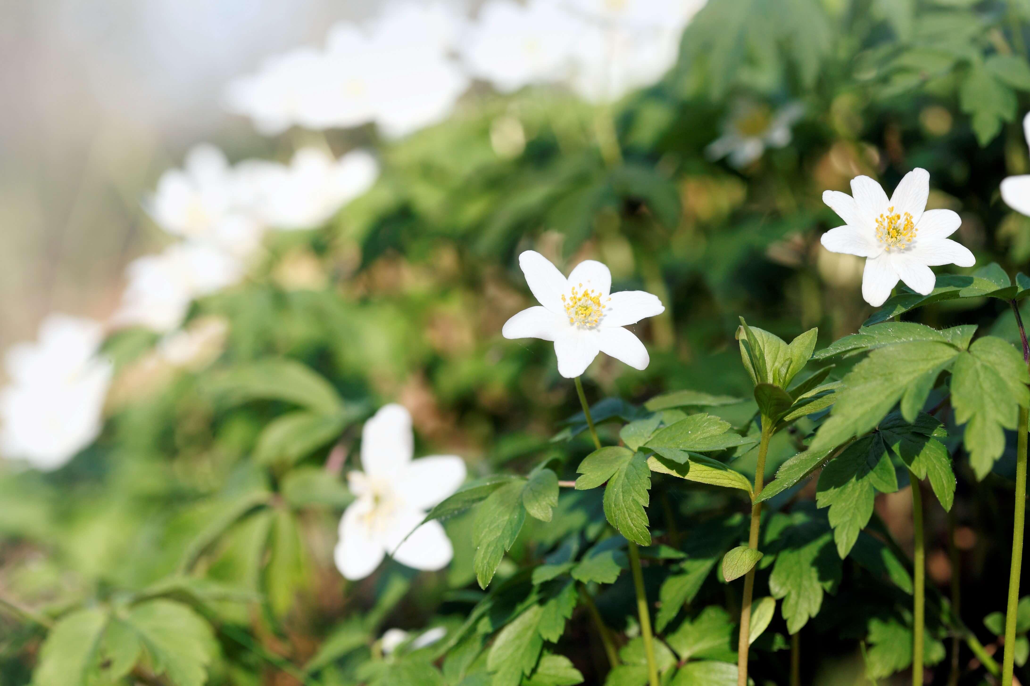 Forår i Middelfart, Fredericia og omegn